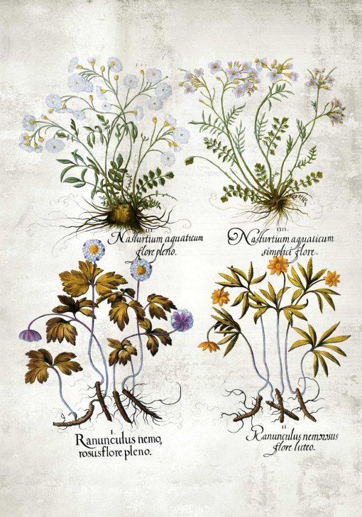 Plakat z roślinami leczniczymi do apteki na ścianę