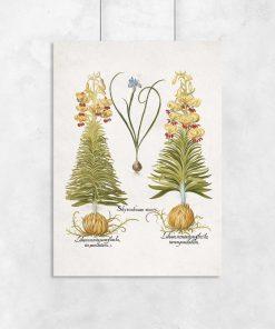 Plakat z roślinami leczniczymi do dekoracji szkoły