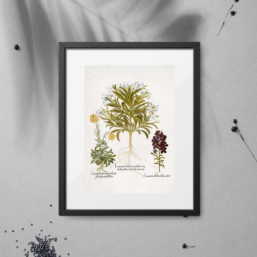 Plakat z roślinami leczniczymi do oprawienia
