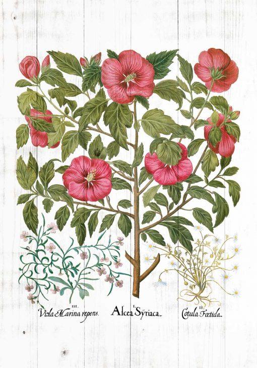 Plakat z roślinami leczniczymi do ozdoby apteki