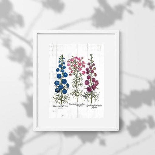 Plakat z roślinami leczniczymi