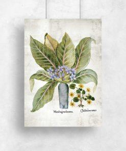 Plakat z roślinami leczniczymi - szkolna pomoc naukowa