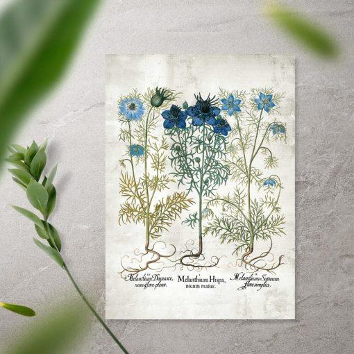 Plakat z roślinami zielnymi w kolorze niebieskim