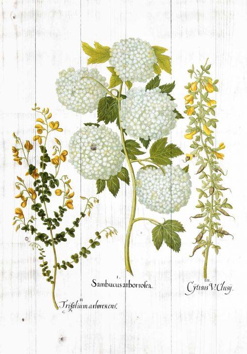 Plakat z tonacji zieleni z motywem kwitnących roślin