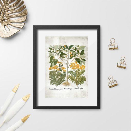 Plakat z ziołami do powieszenia w aptece