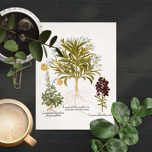 Plakat z ziołami do powieszenia w sklepie