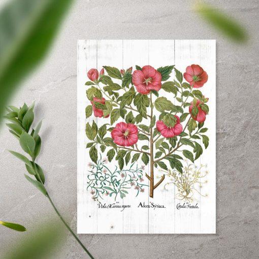 Plakat z ziołami z apteki
