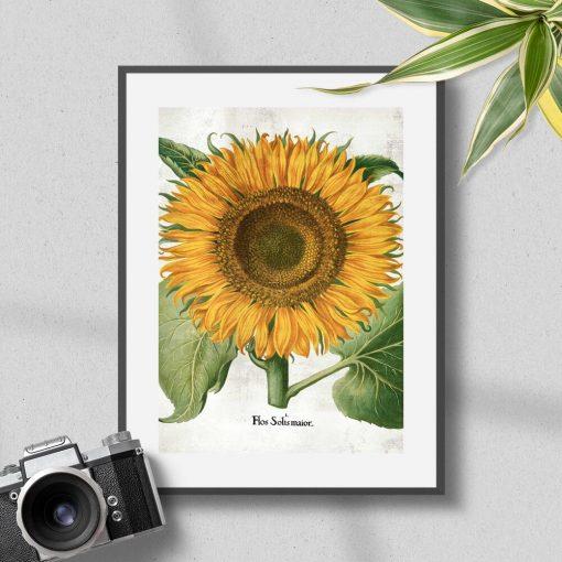 Plakat z żółtym słonecznikiem