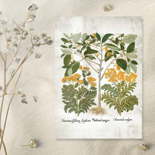 Plakat z żółtymi kwiatkami kwitnących ziół
