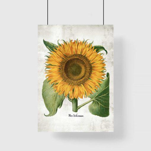 Plakat ze słonecznikiem