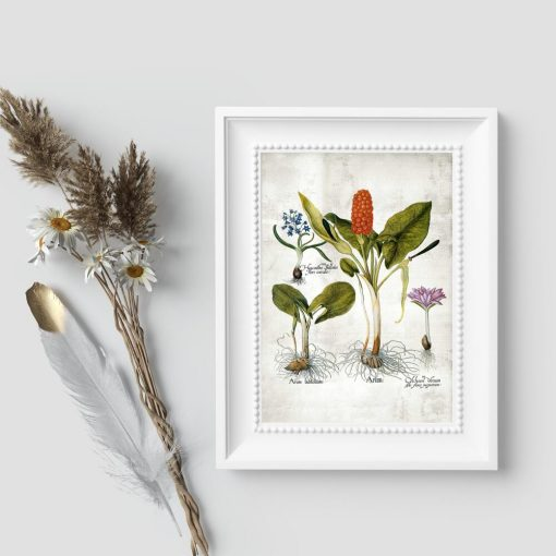 Plakaty botaniczne z bylinami
