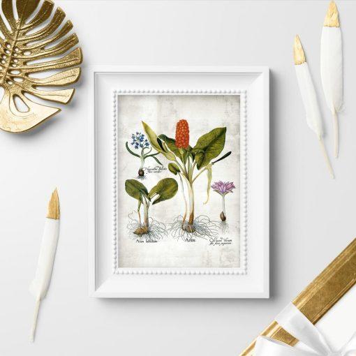Plakaty kwiaty i kłącza roslin wieloletnich