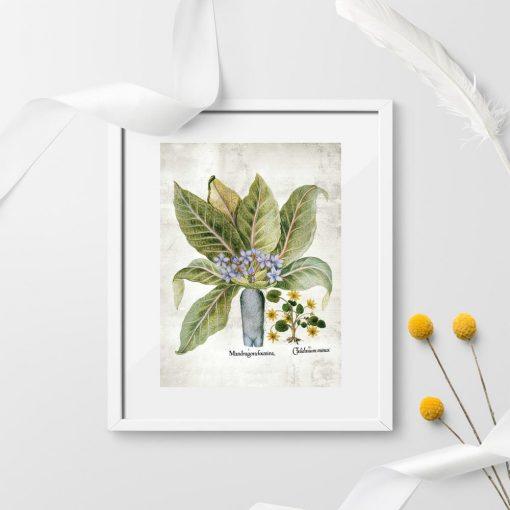 Plakaty rośliny legendy do dekoracji apteki