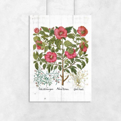 Plakaty rustykalne z roślinami leczniczymi
