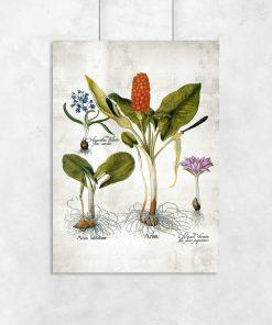 Plakaty z bylinami i ich korzeniami