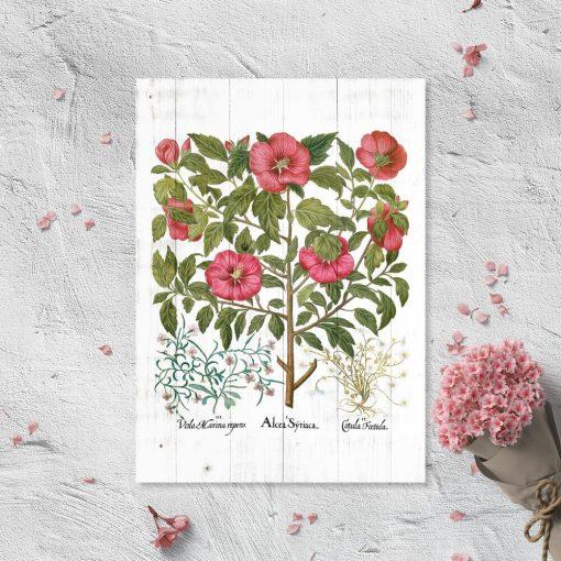 Plakaty z malwą i innymi roślinami leczniczymi