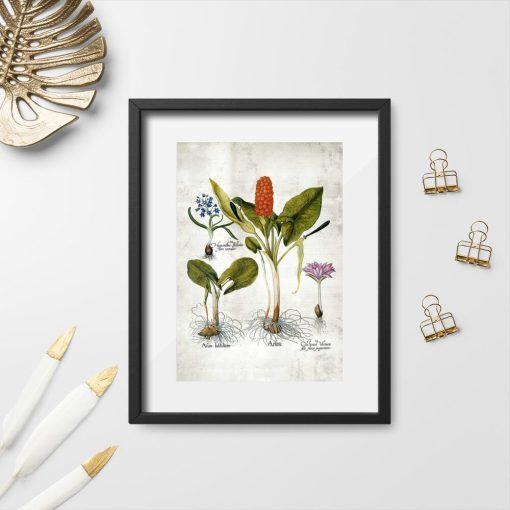 Plakaty z roślinami wieloletnimi i ich korzeniami