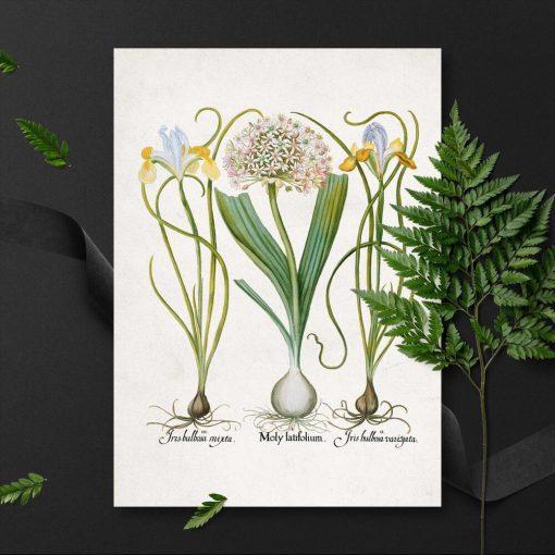 Rośliny użytkowe na plakacie