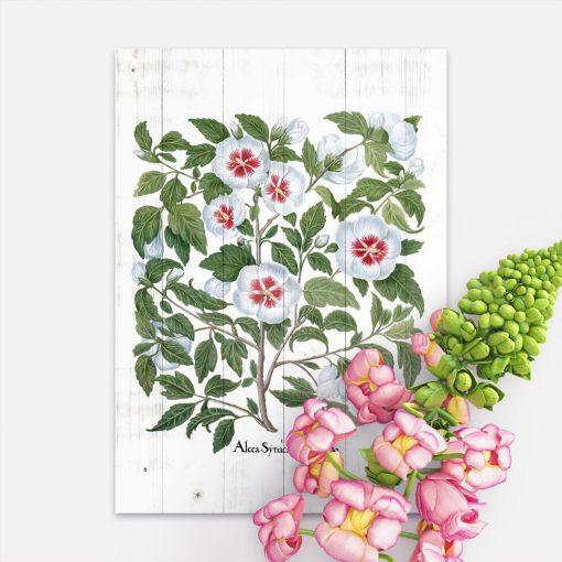 Rustykalny plakat z rośliną leczniczą na tle desek