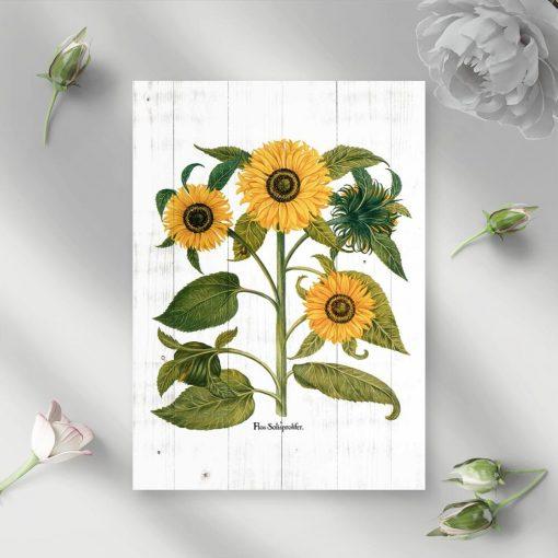 Słoneczniki na plakacie jako pomoc naukowa