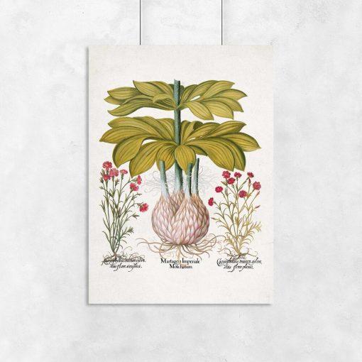 plakat z roślinami polnymi