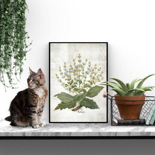 Botaniczny plakat edukacyjny z szałwią do biura