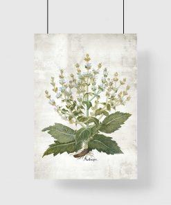 Botaniczny plakat edukacyjny z szałwią do jadalni