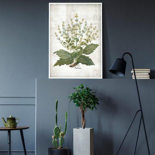 Botaniczny plakat edukacyjny z szałwią do salonu