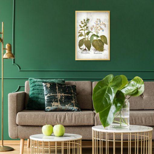 Botaniczny plakat z szałwią trójbarwną do salonu