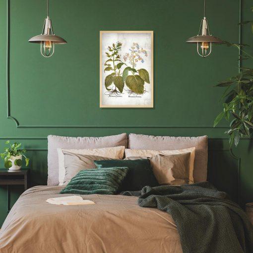 Botaniczny plakat z szałwią trójbarwną do sypialni