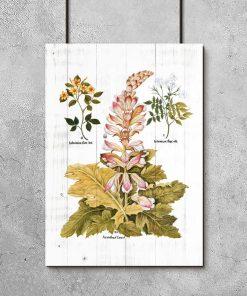 Edukacyjny plakat z łacińskimi nazwami roślin