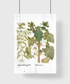 Edukacyjny plakat z ziołami