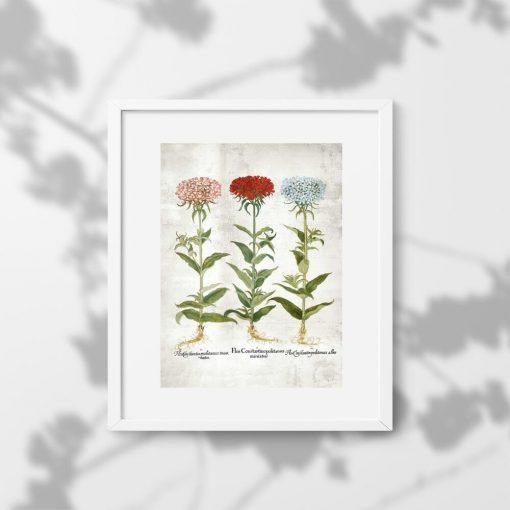 Kwiaty ogrodowe na rustykalnym plakacie