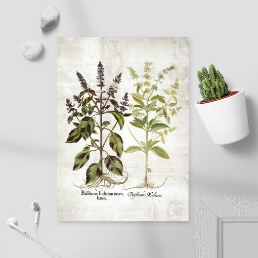 Plakat bazylia i jej kwiaty do dekoracji kuchni