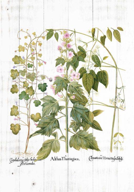Plakat edukacyjny rośliny zielne i ozdobne