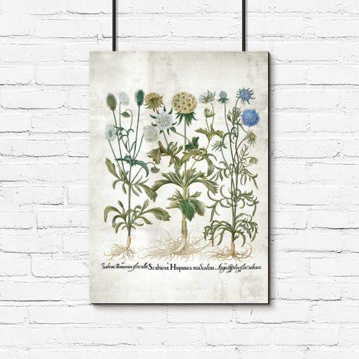 Plakat edukacyjny z kwiatami i nazwami łacińskimi
