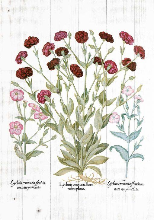 Plakat edukacyjny z kwiatami ogrodowymi do jadalni