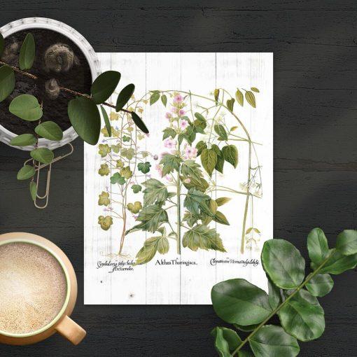 Plakat edukacyjny z motywem botanicznym