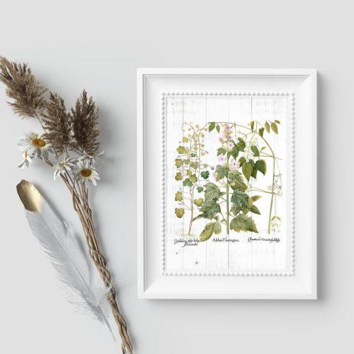 Plakat edukacyjny z roślinami ozdobnymi
