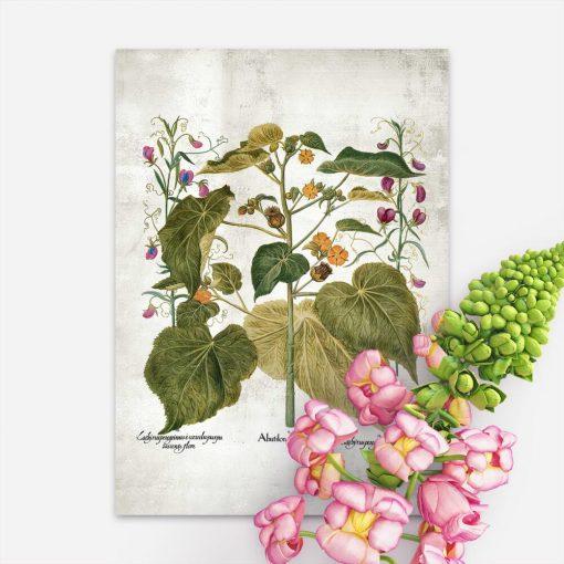 Plakat edukacyjny z zaślazem i innymi roślinami