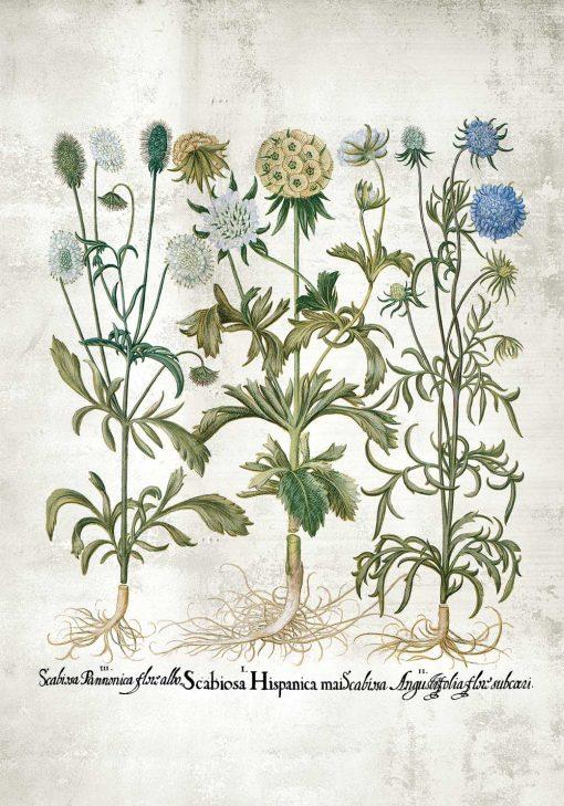 Plakat rośliny dekoracyjne do ogrodu