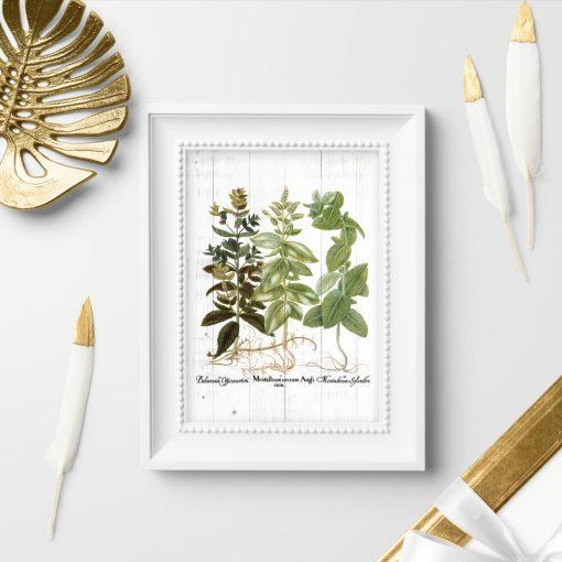 Plakat rośliny zielne i łacińskie nazwy