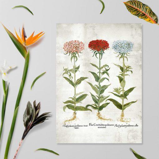 Plakat rustykalny z trzy odmiany floksów