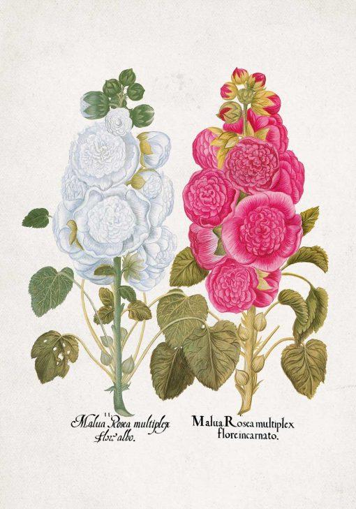 Plakat w pastelowych kolorach z malwami