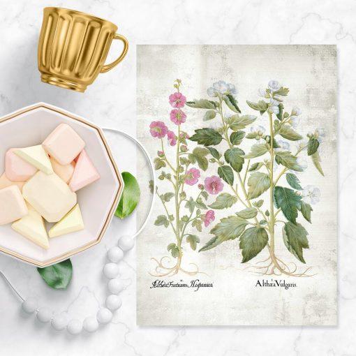 Plakat z białymi kwiatami malwy
