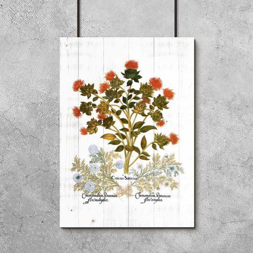 Plakat z drapaczem i rumianem rzymskim do dekoracji apteki