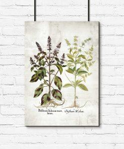 Plakat z kwiatami bazylii do dekoracji kuchni