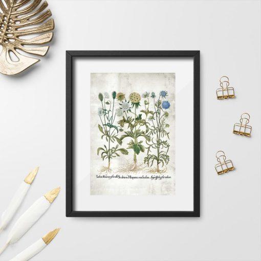 Plakat z kwiatami rabatowymi