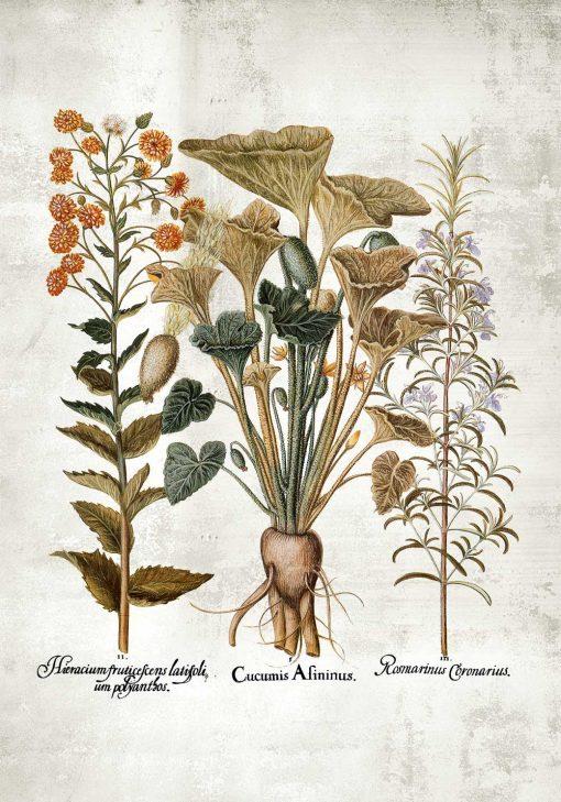 Plakat z motywem roślin i łacińkich nazw