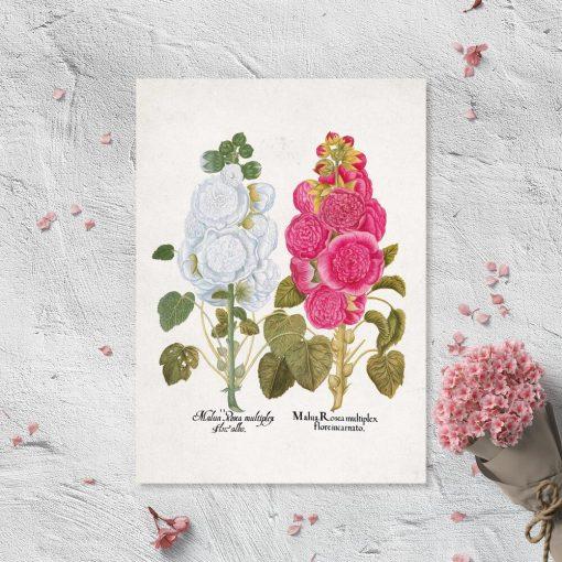 Plakat z motywem ślazu w pastelowych kolorach